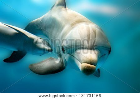 Dolphin Smiling Eye Close Up Portrait Puzzled
