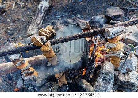 tourist camp with bonfire and gathered mushrooms
