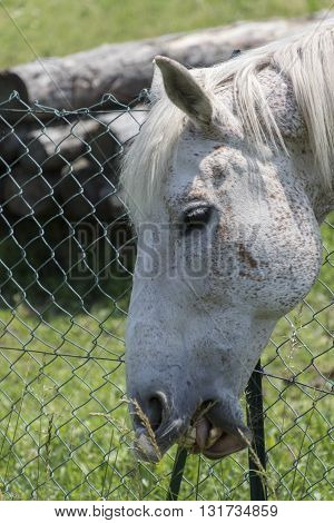 Horse In The Farm