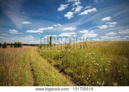 The field which has overgrown herbs with the rural road in the sunny summer day
