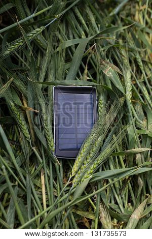 the solar battery is charged in the field of young green wheat