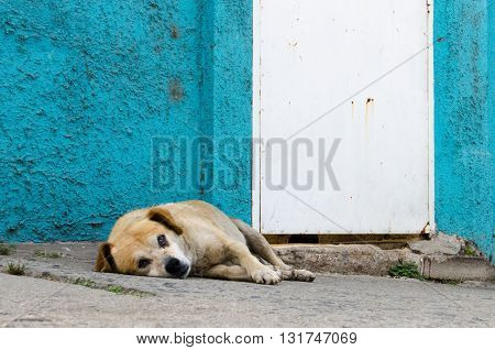 Dog homeless on the street and colorful wall