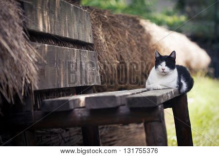 horizontal photo of a black and white cat sitting and sleeping on a wooden rural bench near a fence