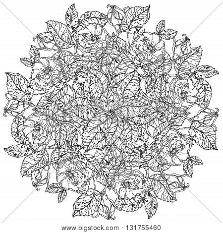 mandala shape roses in old masters style bouquet for adult coloring book in zen art therapy style for anti stress drawing. Hand-drawn, vector, detailed mandala, for coloring book, poster design