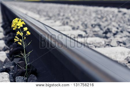 Horizontal perspective view of a yellow flower growing near a railroad track