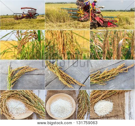 Set of harvest machinery and paddy rice