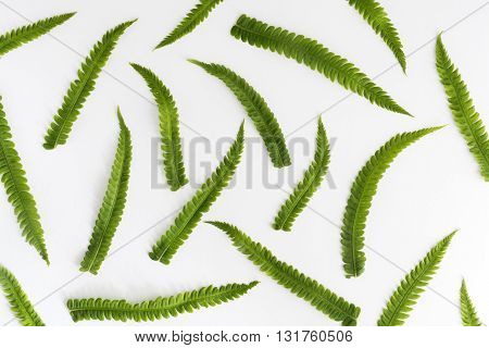 fern branches and leaves on white background
