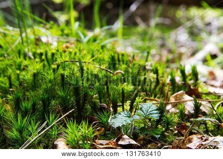 Close Up Of Moss Growing On The Woodland Floor