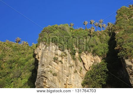 High cliffs in Punakaiki New Zealand. Green bush and palm trees.
