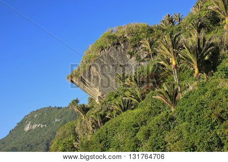 Scene in Punakaiki New Zealand. Big rock at the west coast. Palm trees.