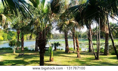 Green palm trees  Palms grow in warm regions, especially the tropics.