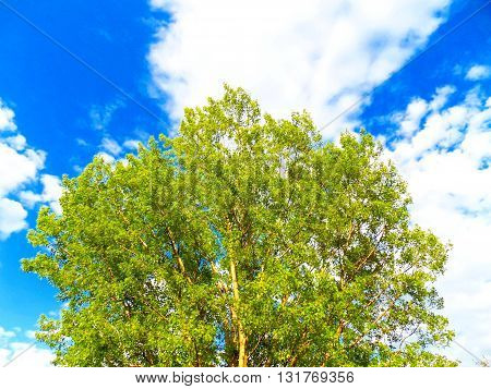 Deciduous tree and partly cloudy sky during day