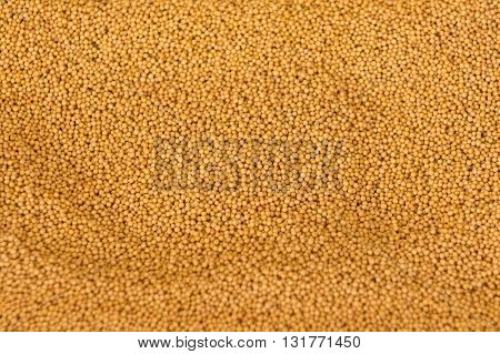 image of spices mustard pictures taken close-up