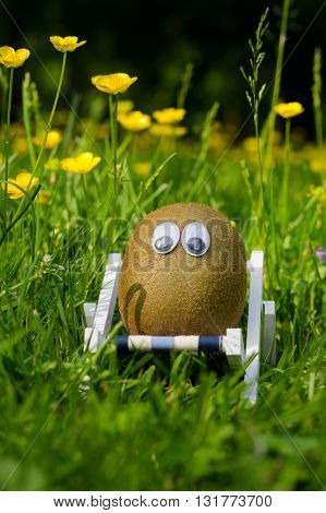 Funny kiwi with eyes in a summer meadow