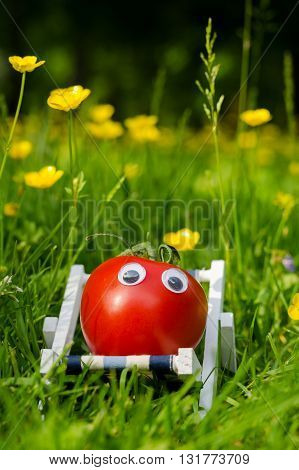 Funny tomato with eyes in a summer meadow