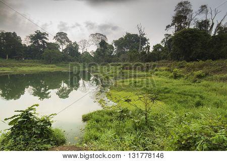 Jungle Walks Forest Treks Asia