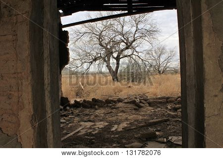 Viewing through an Abandoned House at the Creepy Trees