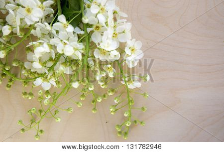 White bird-cherry flowers on wooden background. Wooden surface. White flowers. Bird-cherry leaves and flowers. Wild flowers bouquet. White flowers on wooden background.