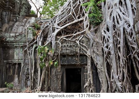 Tree Roots Covering Door At Ta Phrom