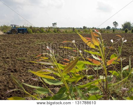 Clearing eucalyptus tree and Soil preparation by tractor