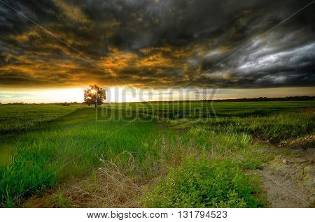 Atmosphere during a rain storm that will hit at a time when the sun goes down in a paddy field