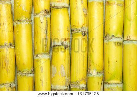Texture of sugarcane varieties is yellow background