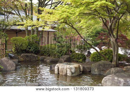 fresh Japanese maple tree and bushes around pond in zen garden