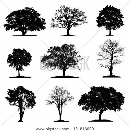 Trees silhouette collection in different layers.  Various isolated tree silhouettes on a white background.