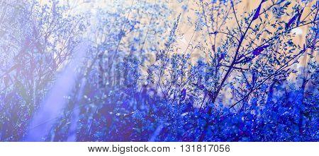 Beauty field grass in blue at summer mystic evening