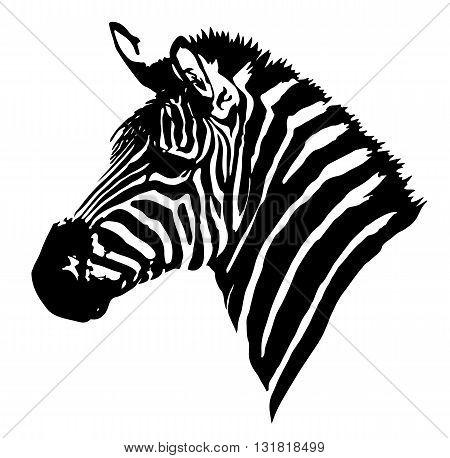 Zebra head. Vector image of an zebra head on white background