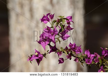Pink flower in front of a light brown tree