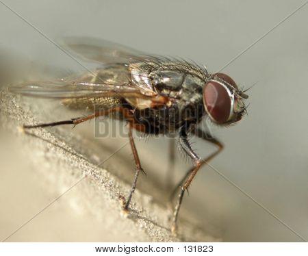 Fly......(8)