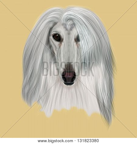 Illustrated Portrait of Afghan Hound dog. Beautiful silver coat face of domestic dog on beige background.
