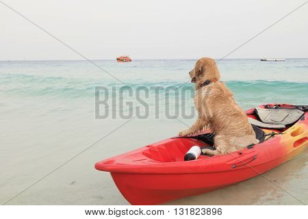 Dog sit in boat waiting someone at sea beach. Adorable golden retrieval dog sitting in boat.