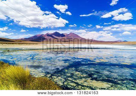 Beautiful Laguna with Flamingos feeding in the National Park Uyuni Bolivia