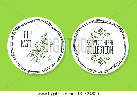 Ayurvedic Herb Collection. Handdrawn Illustration - Health and Nature Set. Natural Supplements. Ayurvedic Herb Label with Holy Basil