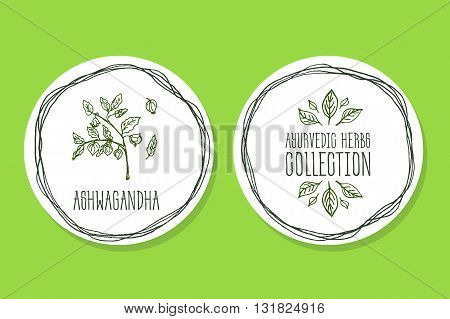 Ayurvedic Herb Collection. Handdrawn Illustration - Health and Nature Set. Natural Supplements. Ayurvedic Herb Label with Ashwagandha