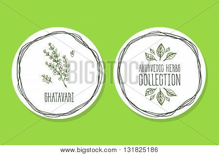 Ayurvedic Herb Collection. Handdrawn Illustration - Health and Nature Set. Natural Supplements. Ayurvedic Herb Label with  Shatavari