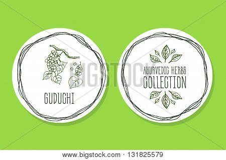 Ayurvedic Herb Collection. Handdrawn Illustration - Health and Nature Set. Natural Supplements. Ayurvedic Herb Label with Guduchi