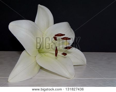 white Lily flower lying on wooden boards on a black background