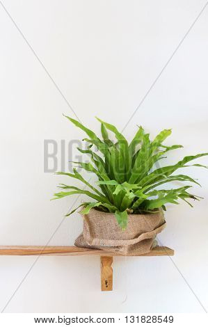Small Tree Potted Plant On Wood Shelf Decorated Interior Room With White Wall