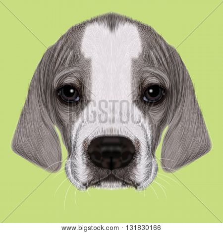 Illustrated Portrait of English Pointer puppy. Cite bicolor short hair domestic dog on green background.