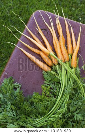 A bunch of fresh garden juicy carrot in the street on a simple wooden bench. The concept of healthy nutrition and home gardening. selective focus