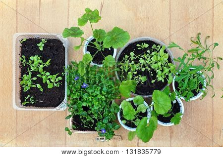 Seedlings of various plants in round and rectangular bowl on a wooden background. View from above.