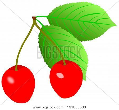 Cherry. Isolated berries on white background ,