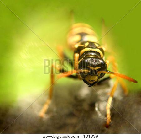 Wasp...(4)