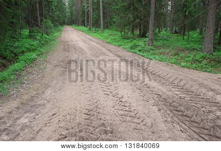 dirt road in the middle of forest