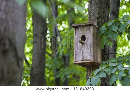 Nesting box or birfhouse on the tree in the forest