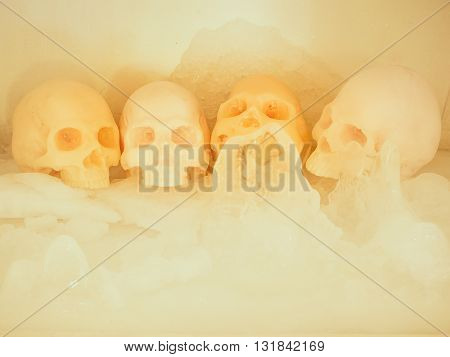 Still life with skull on ice Concept cool