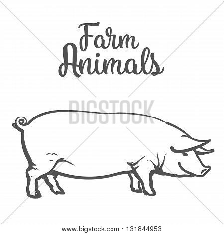 pig on a white background, farm animals pig, sketch illustration drawn by hand, one pig Image thick contented pigs for sale of meat